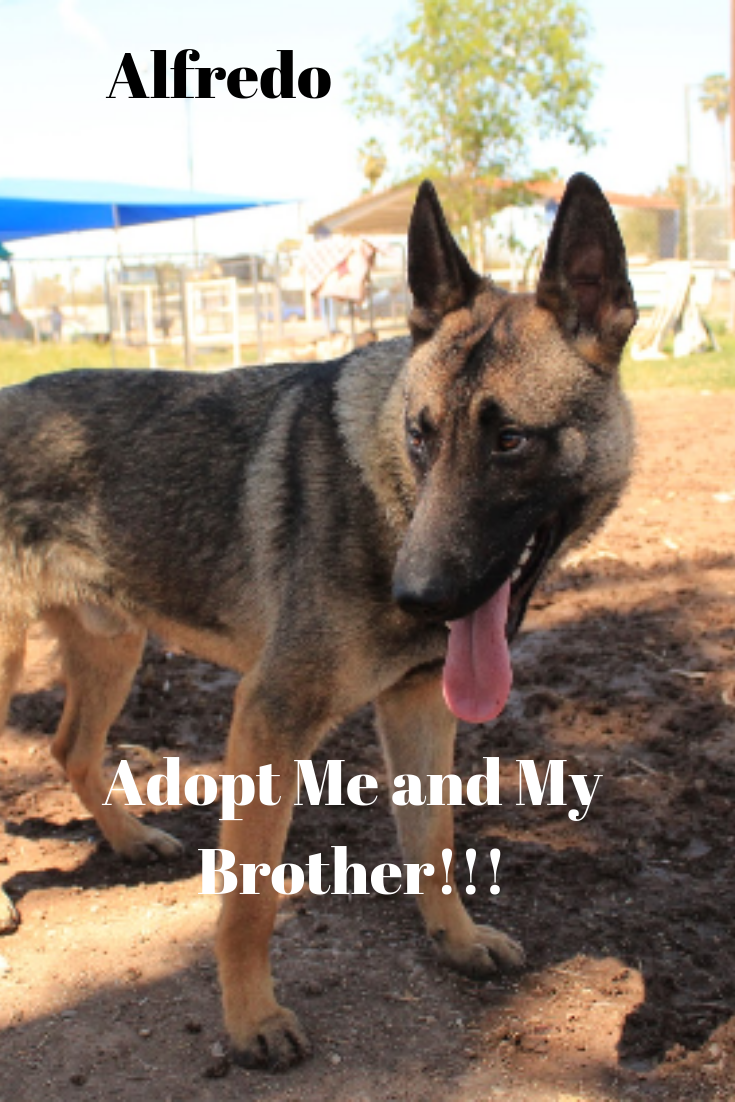 Meet Alfredo Rescue Dogs For Adoption Child Friendly Dogs