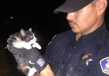PARLIER, Calif. (KMPH)  A Parlier police officer's family may grow by one after he and another officer rescued a kitten from a drainage pipe Monday morning.In a post to its Facebook page, the police department said Officers Jimenez and Corona coaxed the li