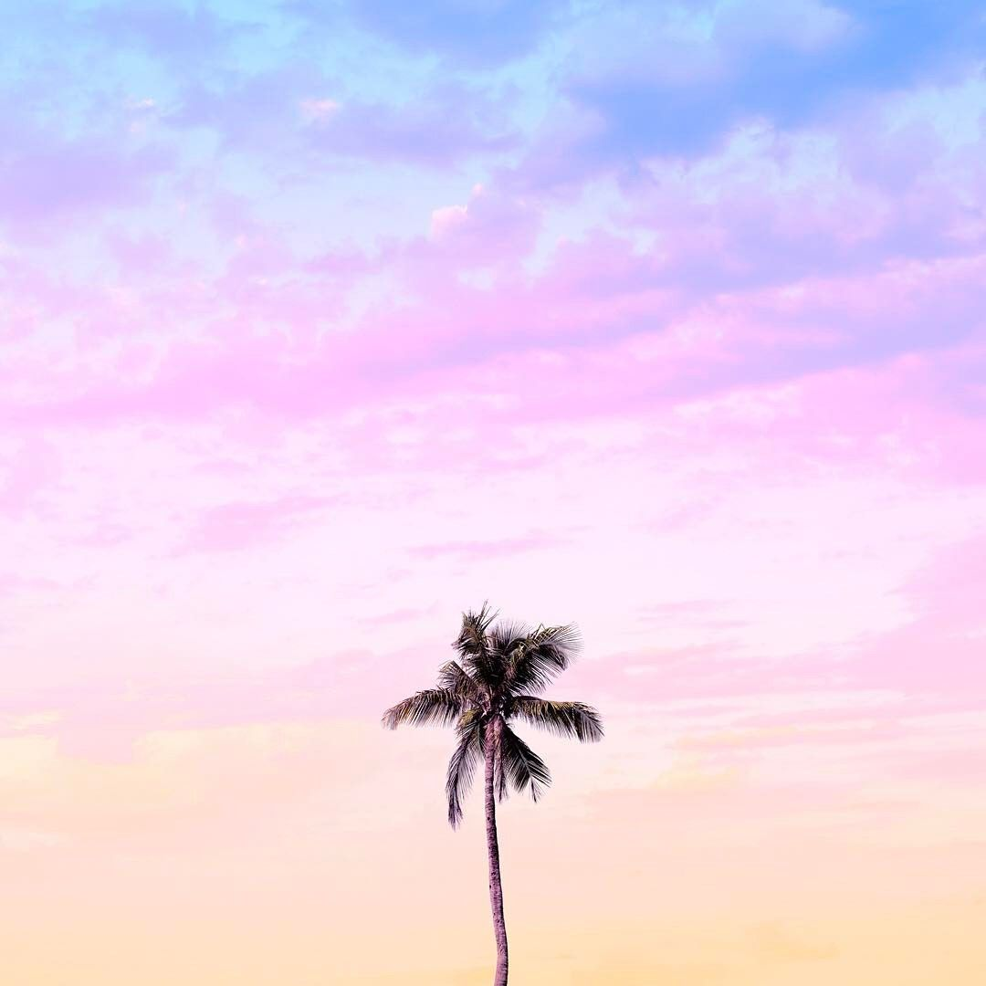 Grab This Wallpaper On My Story To Support This Lonely Palm Tree Palm Trees Wallpaper Pastel Color Wallpaper Pastel Iphone Wallpaper
