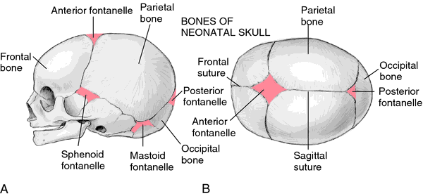 Fontanels Of The Fetal Skull Fontanel Definition Of Fontanel In
