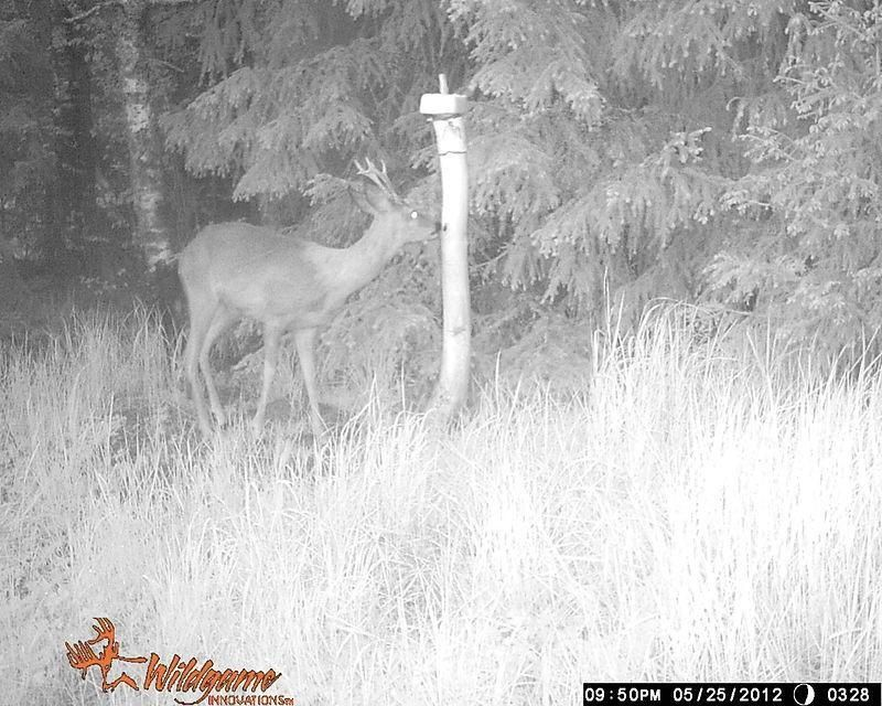 Wildlife Cameras: a snapshot of what you need to know | OSU Extension Service