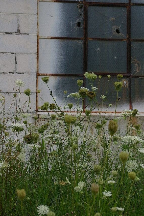 Urban Decay Series Industrial Window Flowers by IntheWoodsStudio