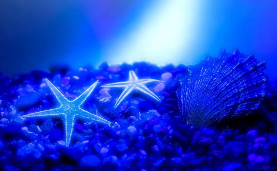 Starfish HD Wallpaper