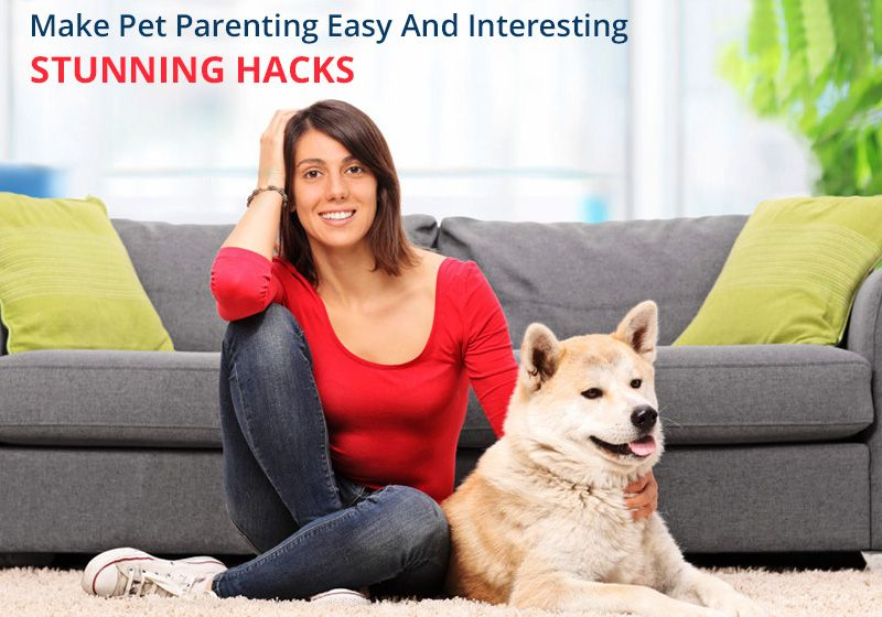 Make #Pet #Parenting Easy And #Interesting – Stunning Hacks for #PetOwners -
