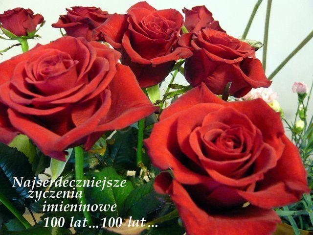 Yczenia Cz 21 Page 573 Klub Senior Cafe Flowers Rose Plants