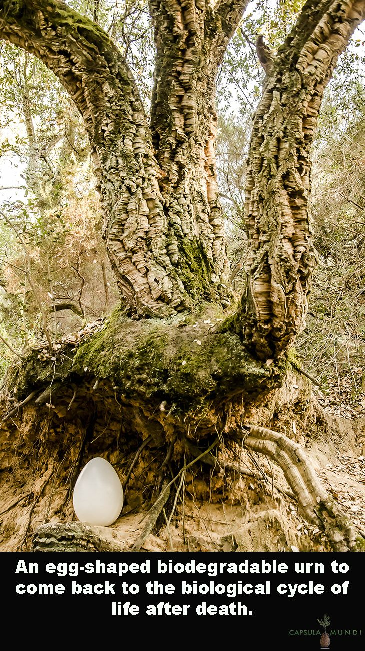 Capsula Mundi Is An Eggshaped Urn To Come Back To The Biological - Capsula mundi burial pods