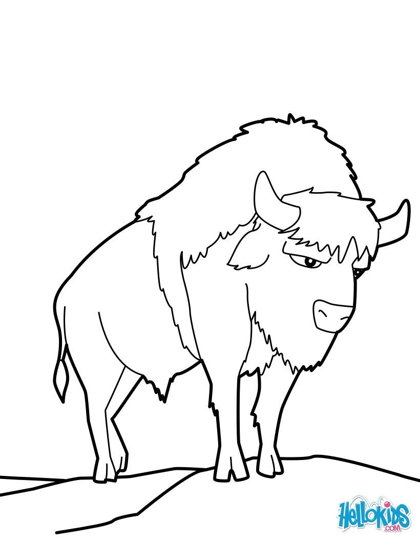 American Buffalo Coloring Page More Forest Animals Coloring