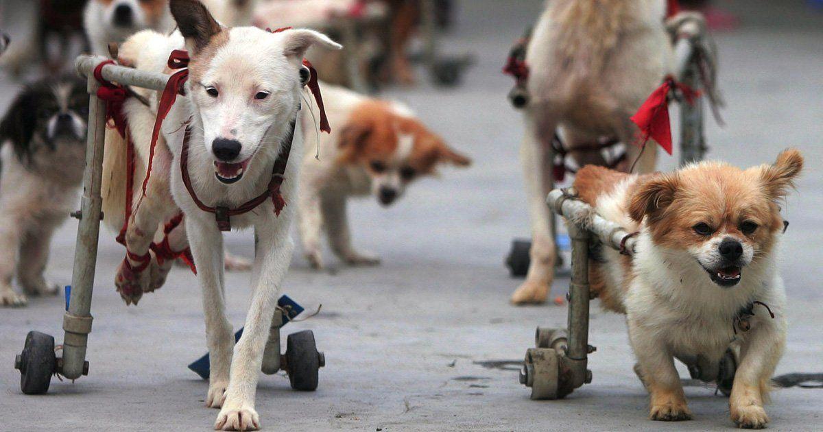 Crear Un Centro De Rehabilitacion Para Perros Invalidos Firma Y Comparte Esta Peticion Ahora Perros Signos De Perros Centro De Rehabilitacion