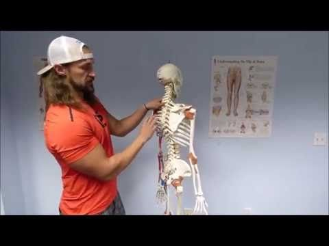 ACE exam anatomy physiology kinesiology flash cards - YouTube | ACE ...