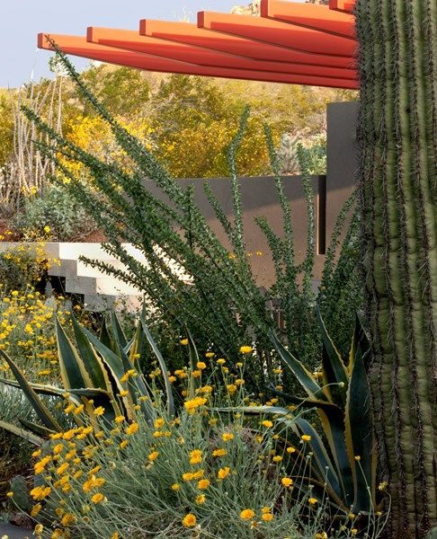 Saguaro Cactus, Ocotillo, Desert Weeds And Walls, Photo Gallery