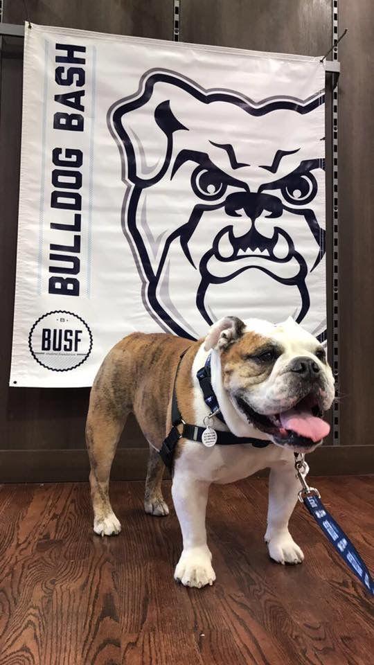 Butler Blue Iii On Facebook Bulldog Dawgs Butler