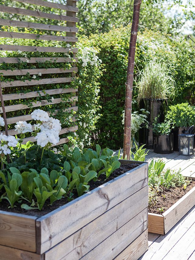 Hochbeet mit Sichtschutz\/Rankelhilfe Garten Pinterest - garten sichtschutz stein