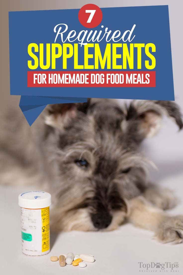 7 homemade dog food supplements to consider dog food