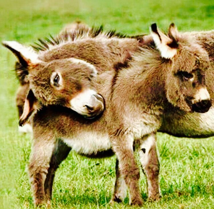 Pin by Toxic☠Glam💋 on Animals Cute animals, Cute donkey