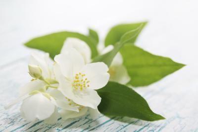 Plantas domésticas que produzem flores brancas