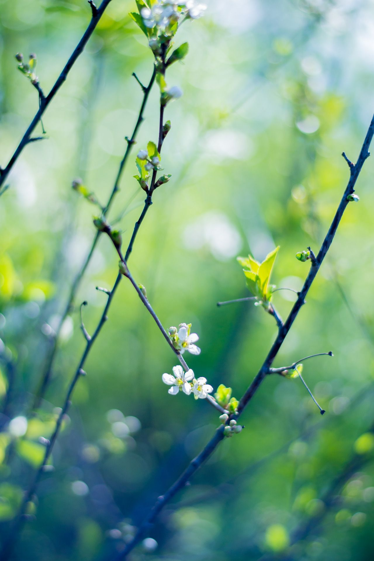 "lenalozhkinaphoto: ""©lenalozhkinaphoto tumblr | flickr"