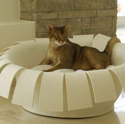 Awesome Modern Furniture Design For Pets, Cats Beds