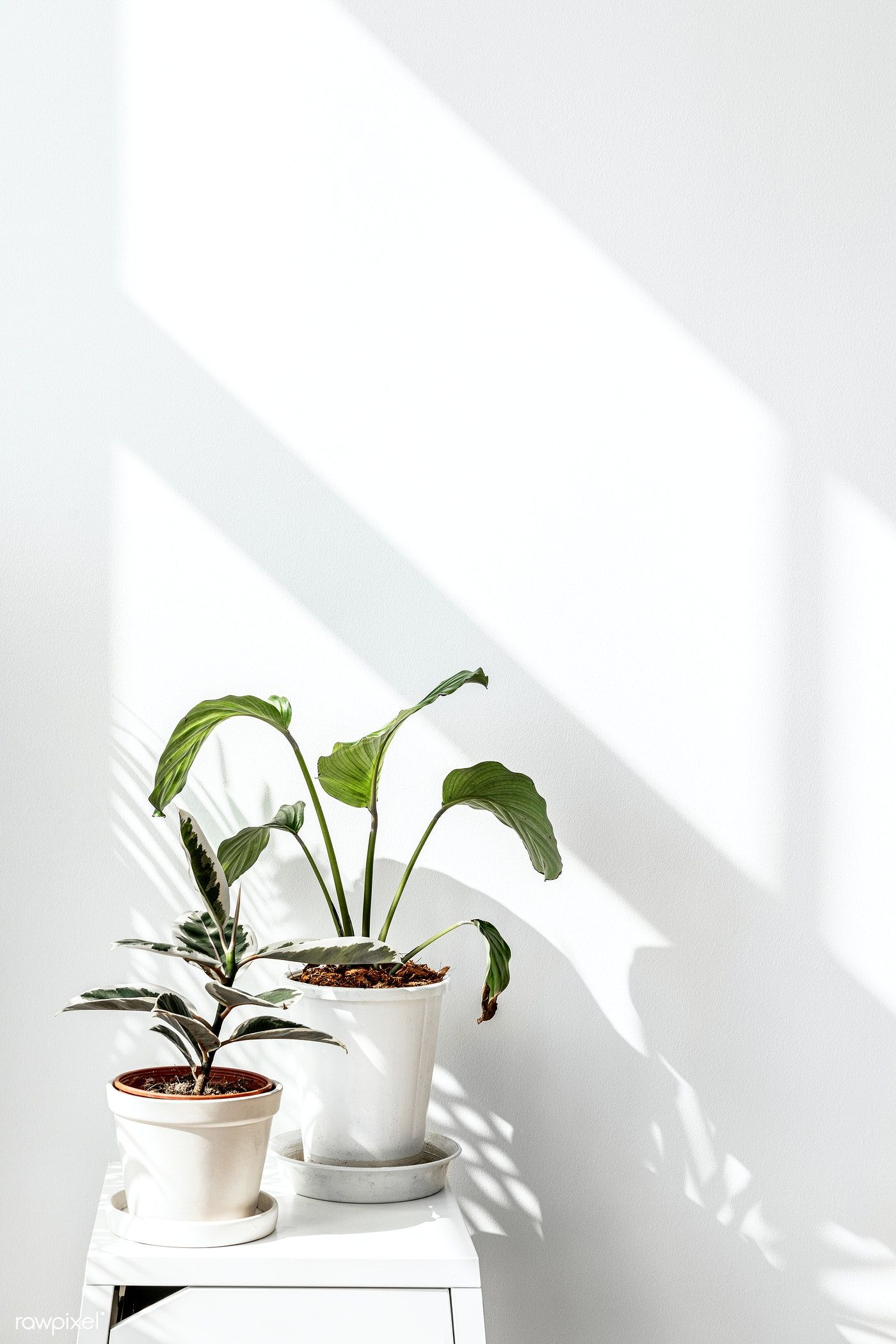 Download premium image of Tropical plants by a white wall with window