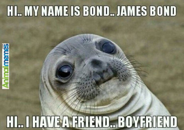 Animal memes James Bond approached a girl lately...