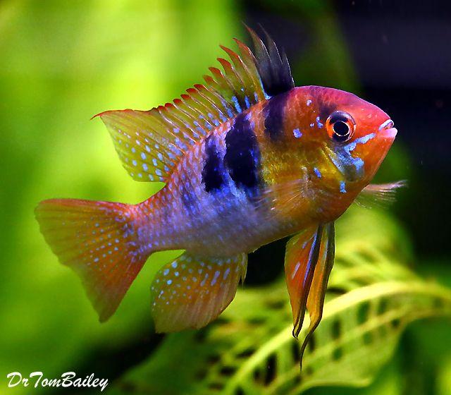 Pin On 2017 State Fair Fish Wish List