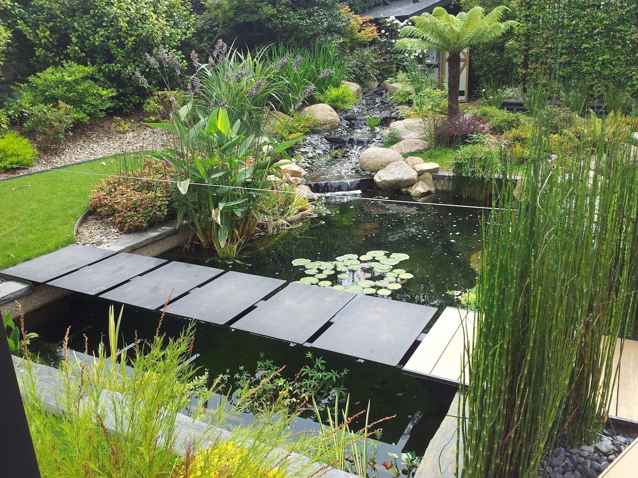 Plantes Pour Jardin Contemporain Épinglé par julie delattre sur bassin a poisson en 2020