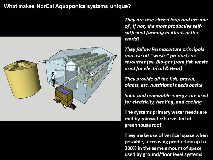 Norcal Aquaponic Systems Aquaponics Aquaponics System Permaculture