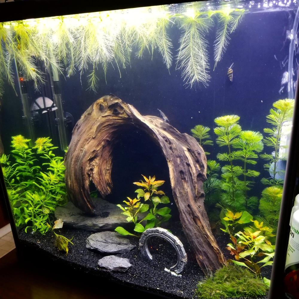 Wafflecat On Twitter Shrimp Tank Aquascape Aquarium