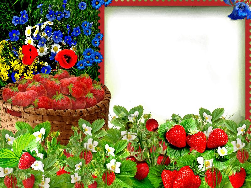 Free Digital Printable Transparent PNG Picture Frames, Borders for ...