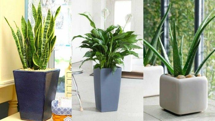 Grne Zimmerpflanzen und Heilkruter die unser Schlaf positiv beeinflssen  Pflanzen