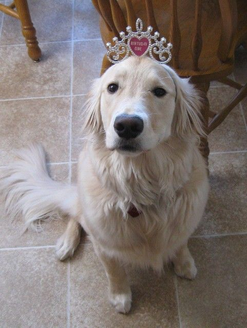 Sophie S First Birthday Wearing The Birthday Girl Tiara May 2