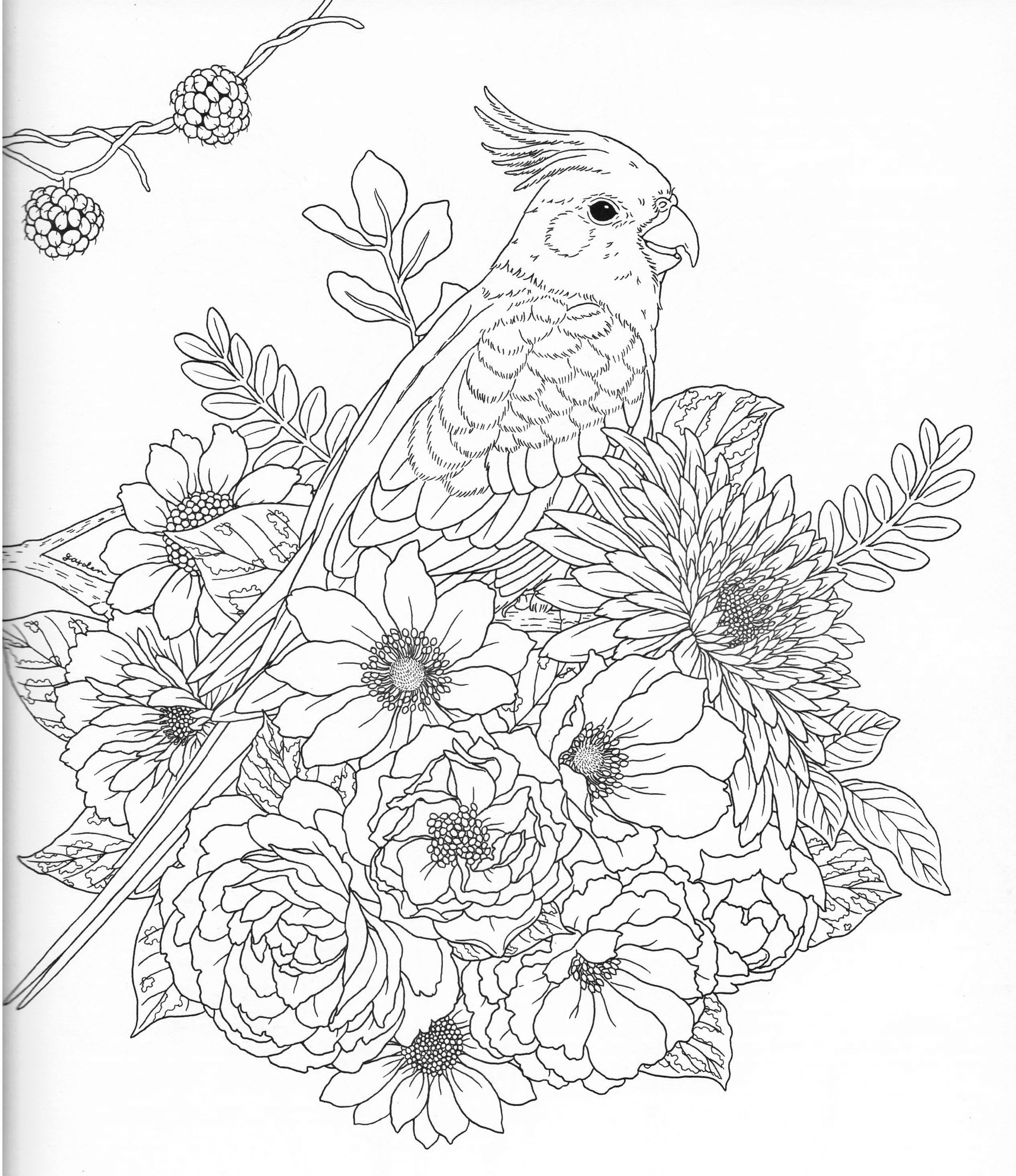 Harmony Of Nature Adult Coloring Book Pg 31