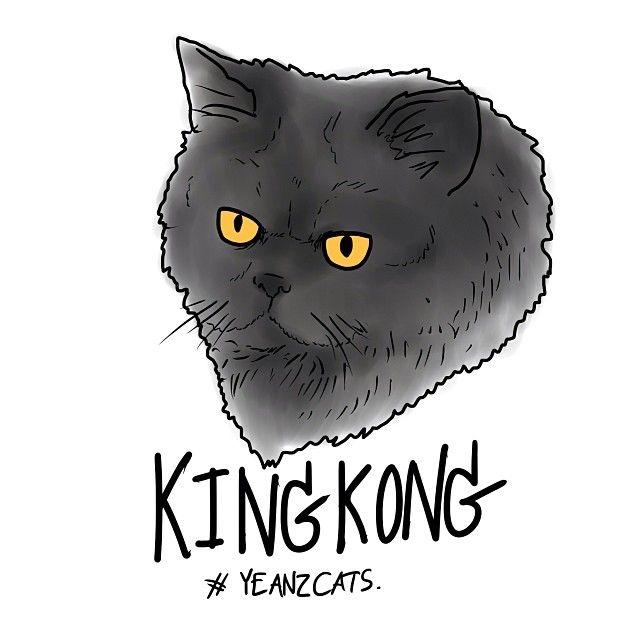 #yeanzcats #cat #persian - @Mark-Kate Yeandle- #webstagram