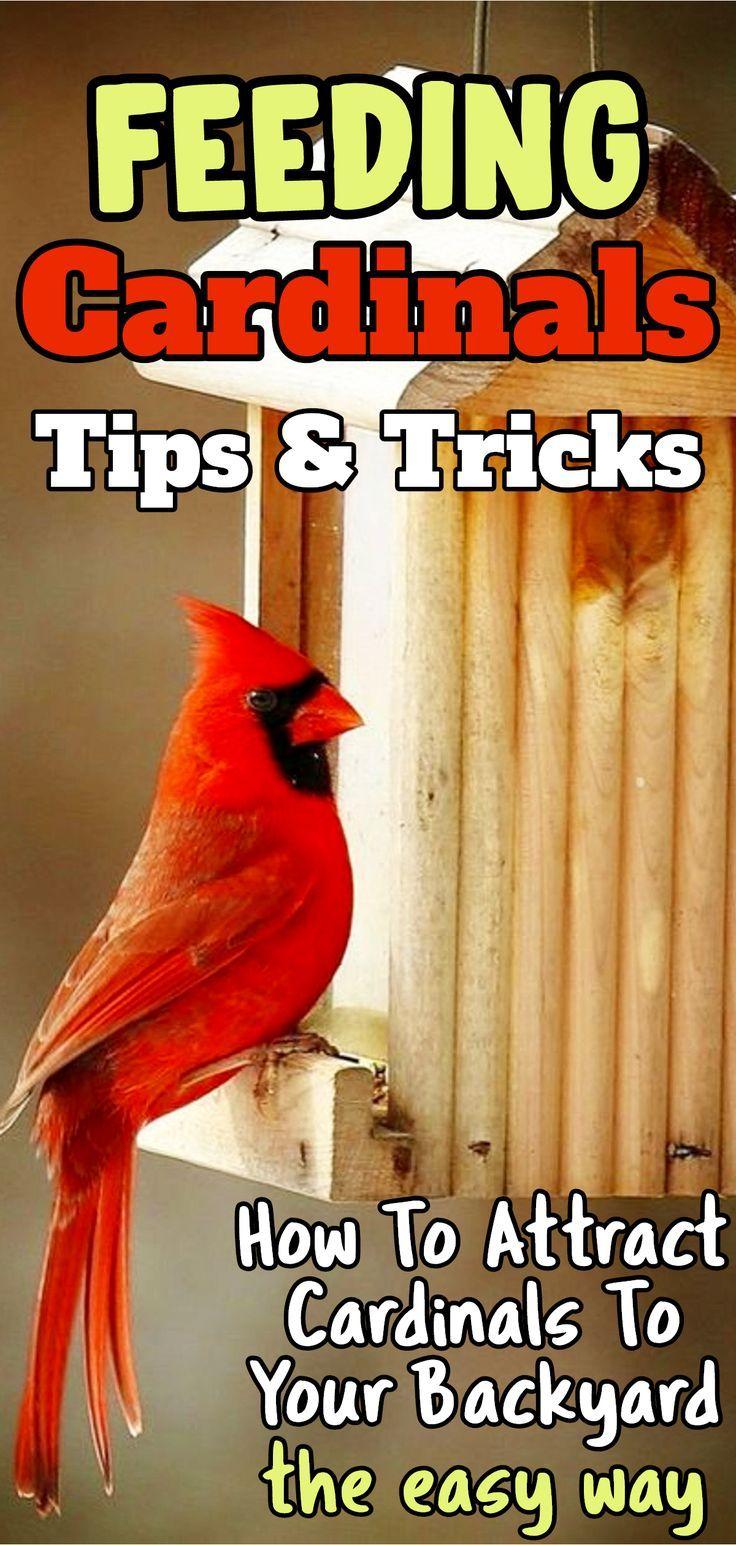 The Cardinal Bird Feeder - What Works Best | Best bird ...