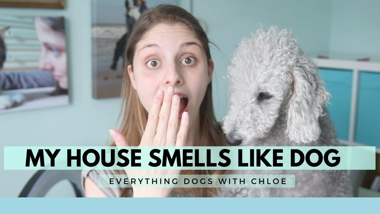 MY HOUSE SMELLS LIKE DOG HOW TO STOP THIS House smells