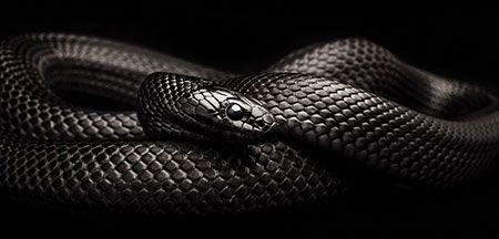 Cobras Super Legais Com Imagens Cobras Cobras Brasileiras