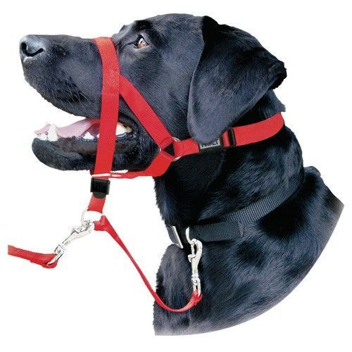 Halti Headcollar With Safety Link Red Dogs Guard Dogs Dog Walking
