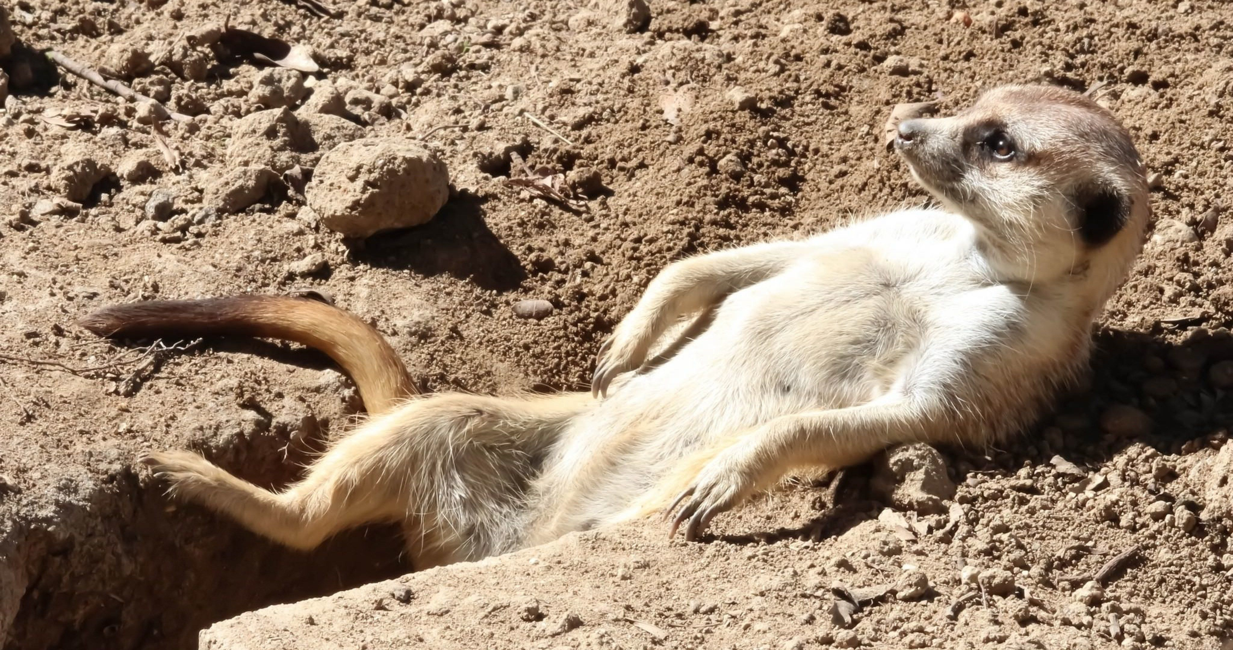 22+ Desert Animals Pictures Download