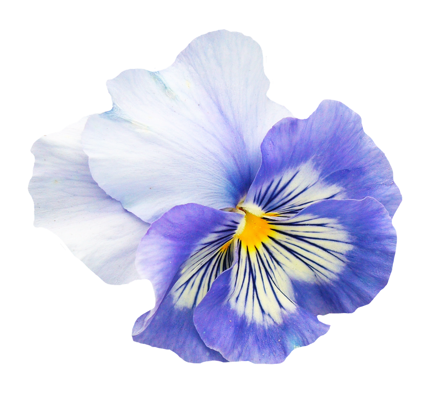 Flower Free Pansy Flower Png Image Flower Png Images Blue Flowers Images Pansies Flowers