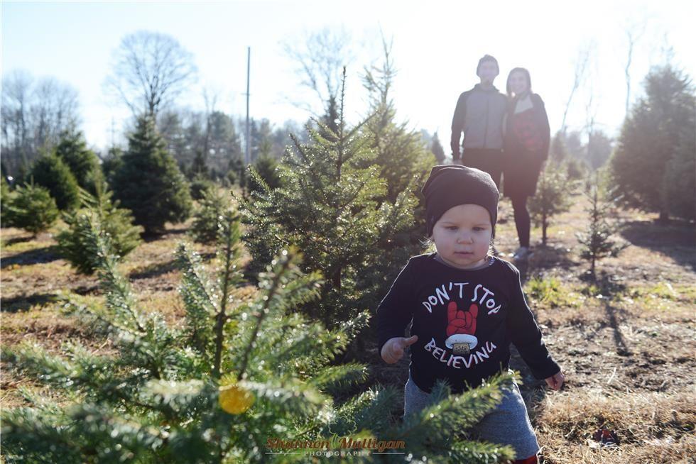 Nj Christmas Tree Farm Fun Long Valley Nj Christmas Tree Farm Farm Fun Tree Farms