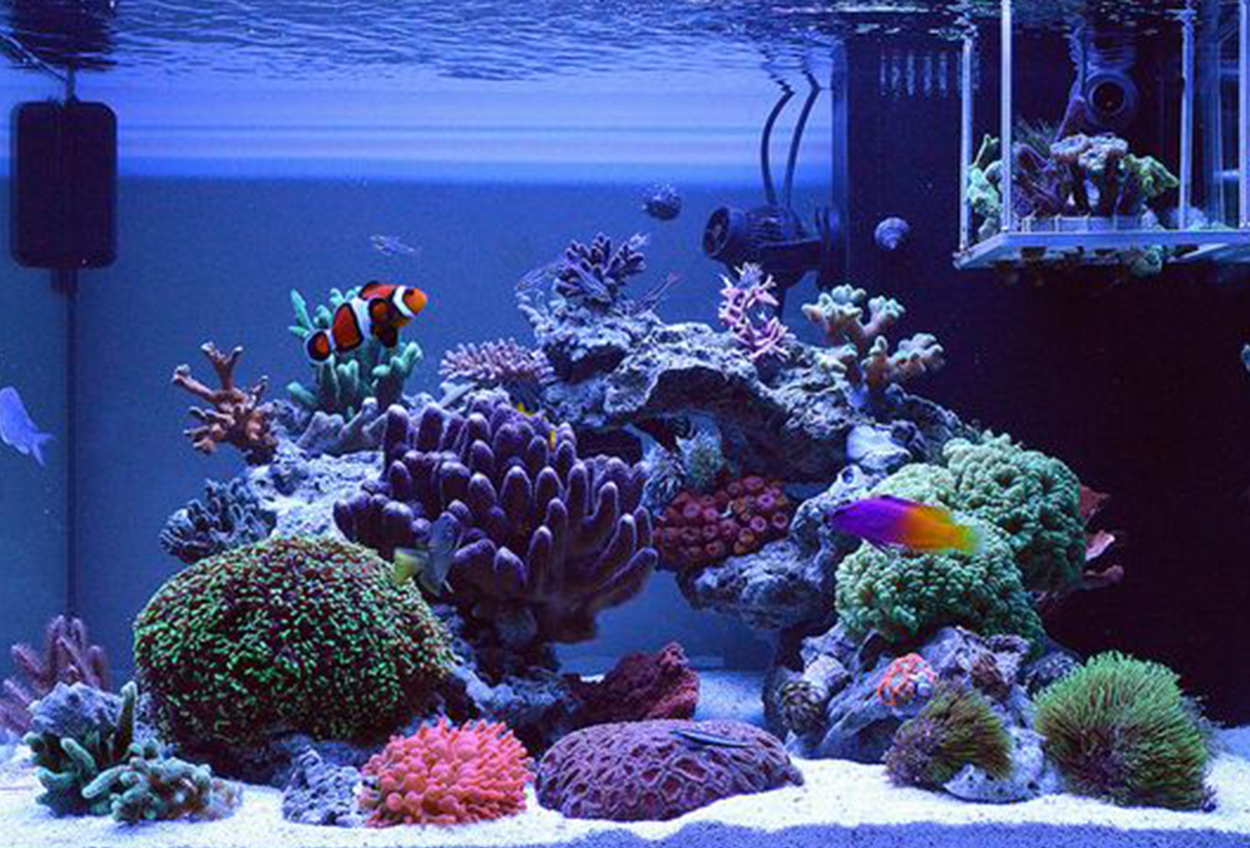 Why A R Reef Tank Now
