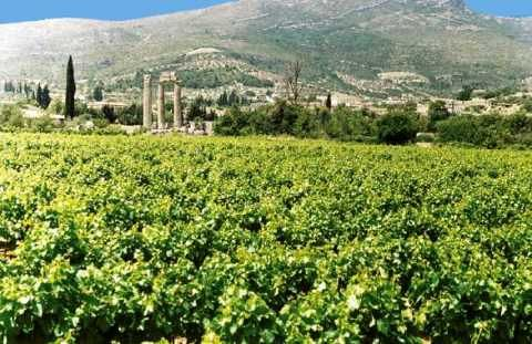Stop#7 - Nemea is arguably Greece's most important red-wine appellation - ancient ruines and wine, lots of wine
