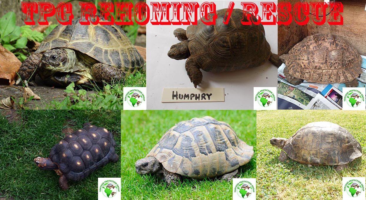 Lots of tortoises for adoption throughout the uk tortoise stuff