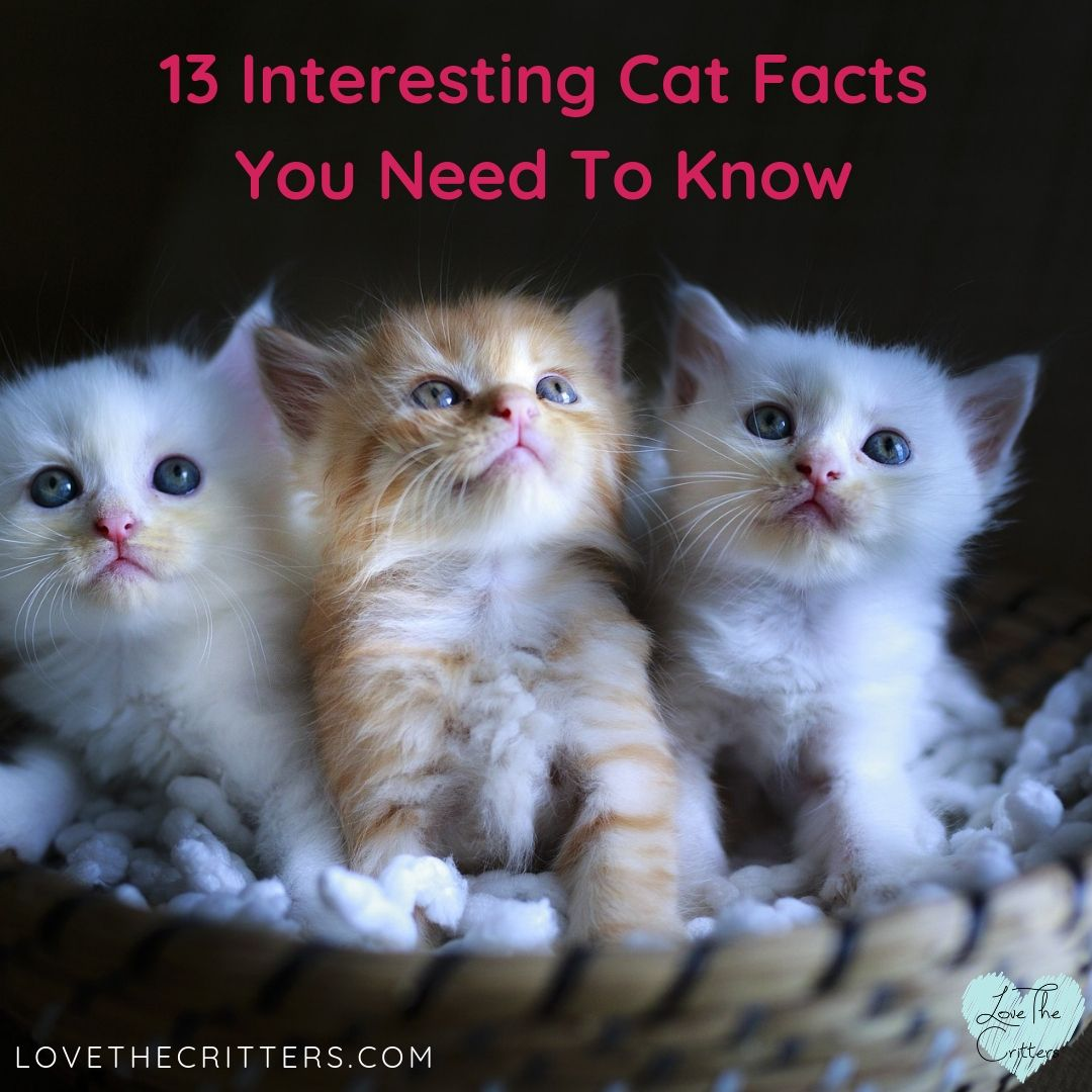 13 Interesting Cat Facts You Need To Know Cat facts, Cat