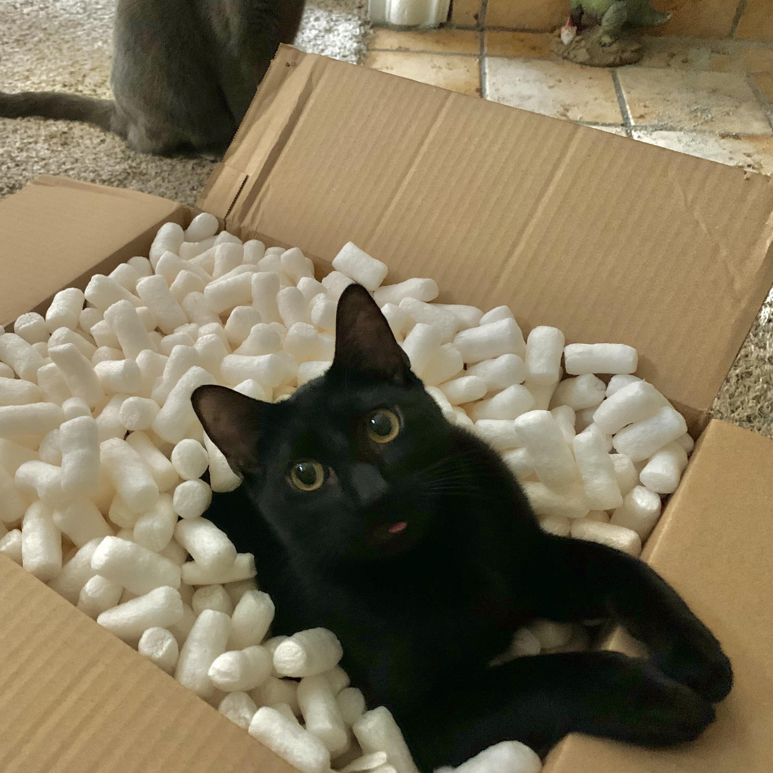 Black Cat Delivery Free Blep Included Teelast Com In 2020 Cats Black Cat Kittens And Puppies