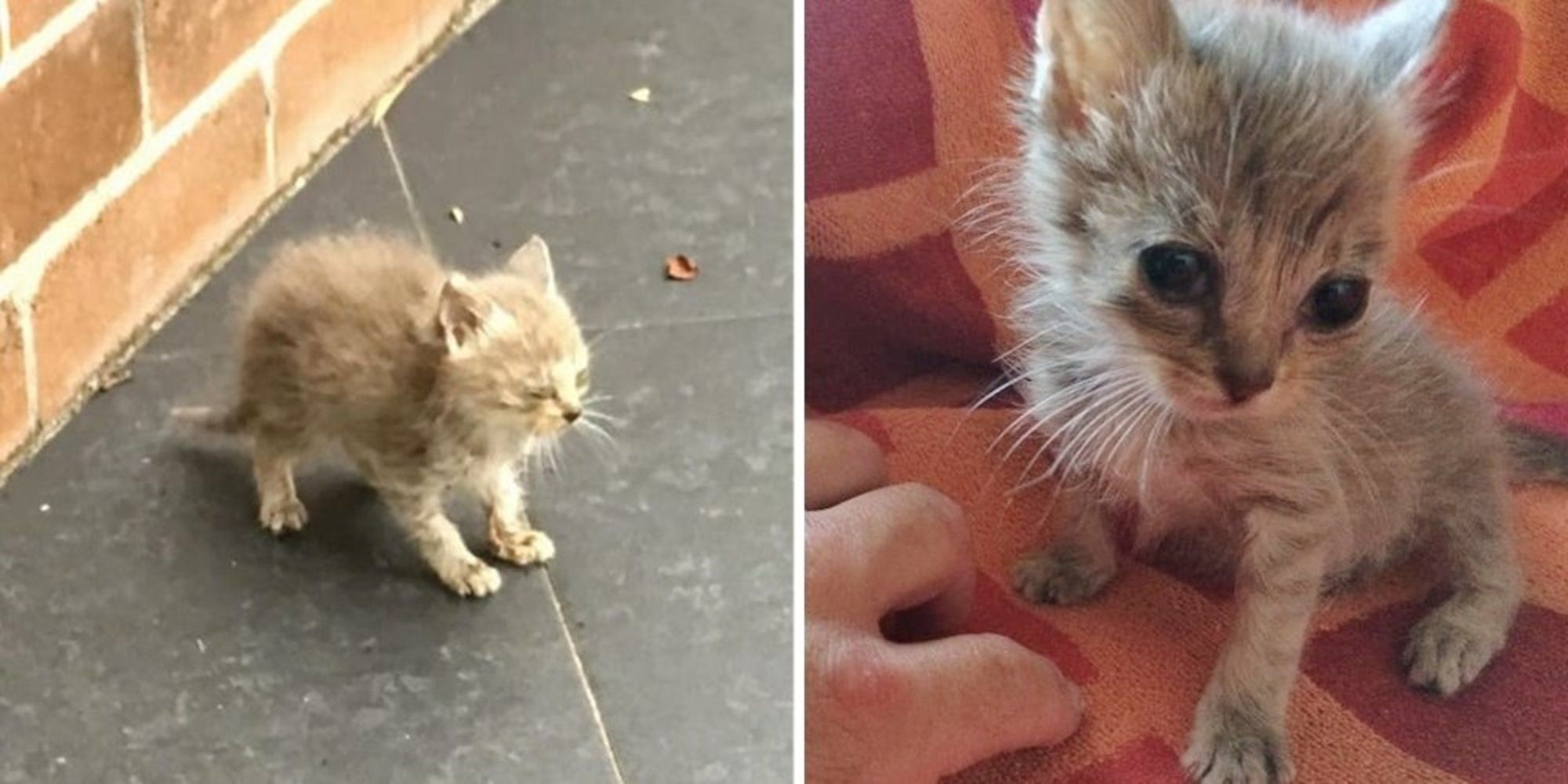 A Scrawny 4 Week Old Kitten Was Found On The Streets Of New South Wales Australia A Man Took The Kitty Off The Sidew Tiny Kitten Frontline Plus For Cats Cats