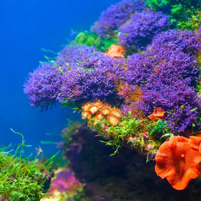 Beautiful undersea flowers florals flowers corals