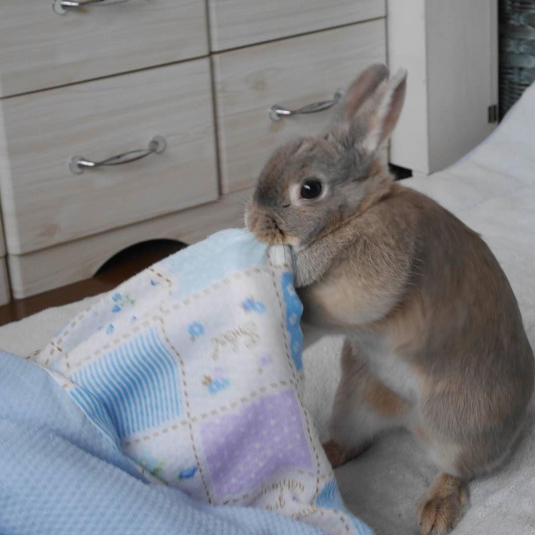 おはも ( ω ) 今日は立ちにゃむにゃむ : 地震大丈夫なんでしょうか 昨夕から仕事でテレビ見てなかった為 今頃知ったけど すべての方が無事でありますように すべてのうさぎさんも無事でありますように : #うさぎ#ウサギ#兎#bunny#bunnys#bunnystagram#bunnylove#love#loveit#cute#cutenesse#可愛い#癒し#rabbit#rabbits#rabbitstagram#ミニウサギ#animals#もっちゃん by kana.merumo