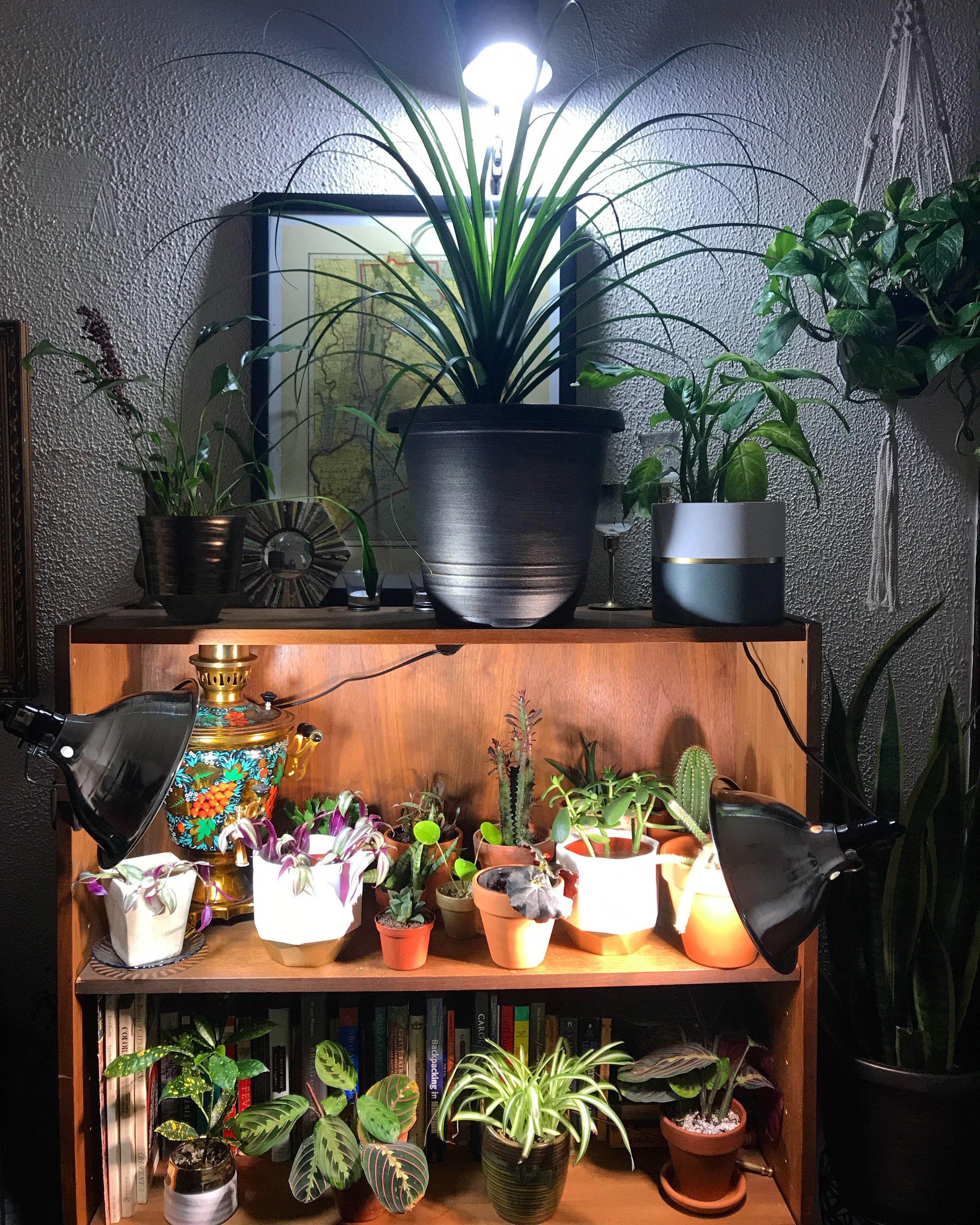 SANSI LED Security Lights, LED Bulbs, Grow Lights (With