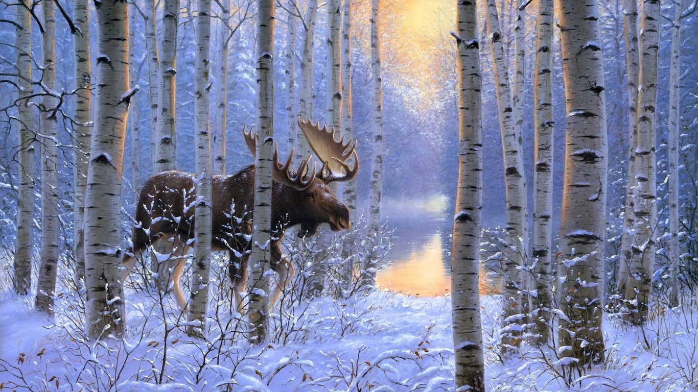 Moose In The Snowy Forest Wallpaper Snowy Forest Forest Wallpaper Wallpaper