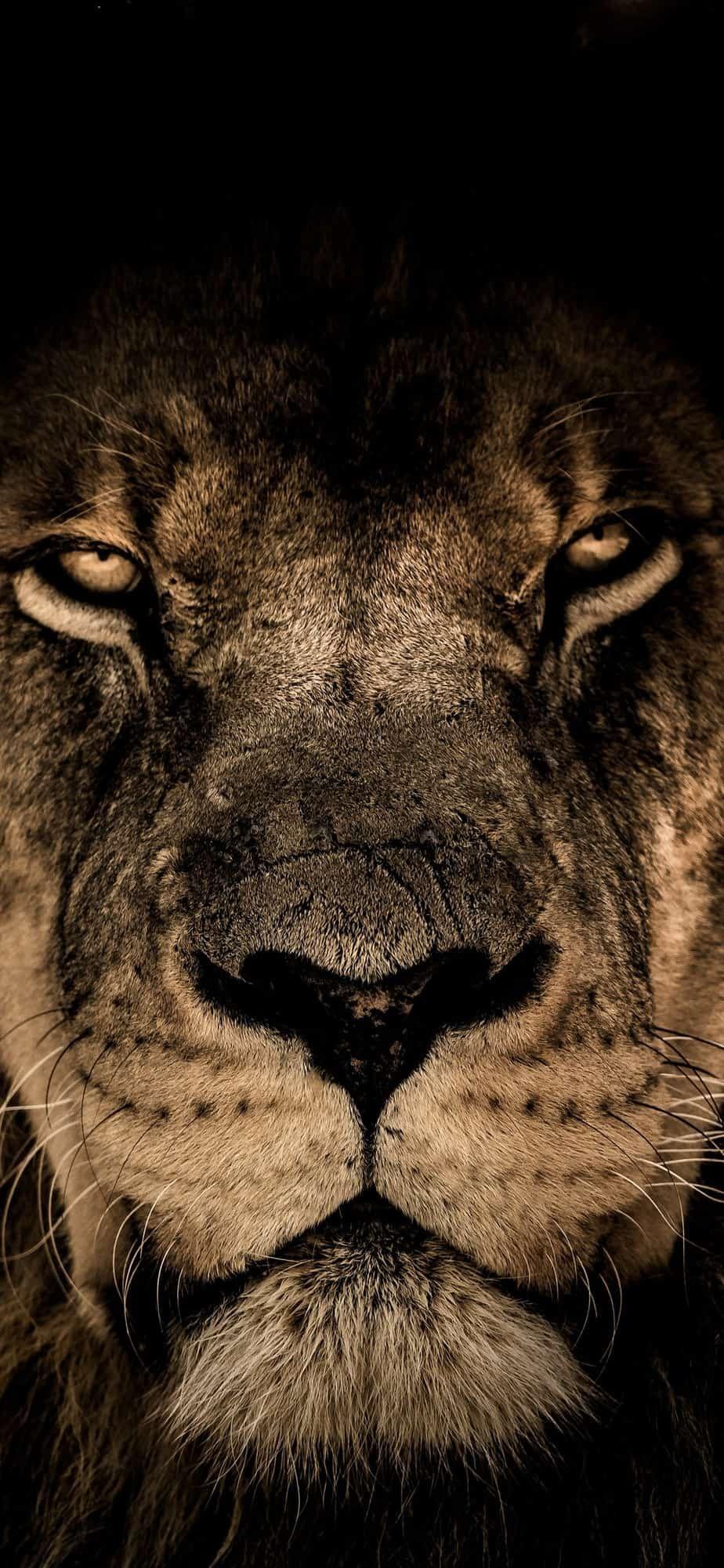 Iphone Xr Wallpaper 364 4k Hd Download Free Hd Wallpaper Screensavers Dw Gaming Com Download Free Hd Wall Lion Pictures Animal Wallpaper Lion Wallpaper